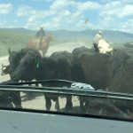 Nothin' like experiencing a cattle drive  :/