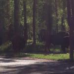 Our camping neighbors - Gros Ventre Campgrnd,  near Jackson Hole, Wy.
