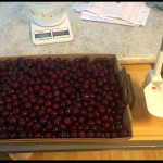 Purchased sour cherries ready to become jam!