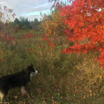 even a dog can appreciate the colors of fall!